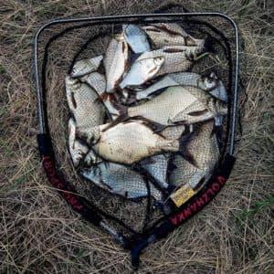 Рыбные места в Орловской области