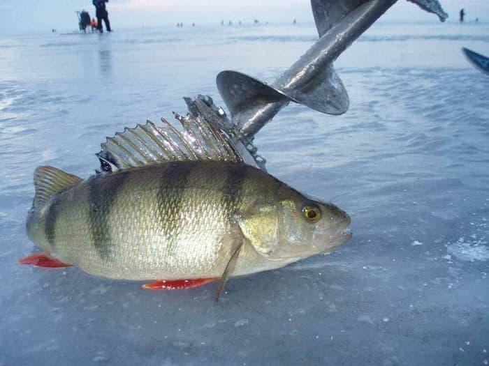 Уловистые мормышки для зимней рыбалки