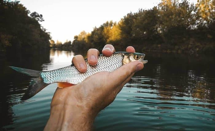 Рыболовный календарь на ноябрь