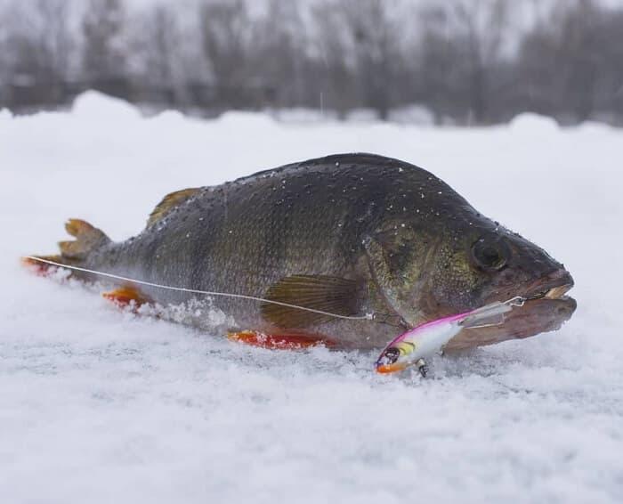 Оборудование для рыбалки