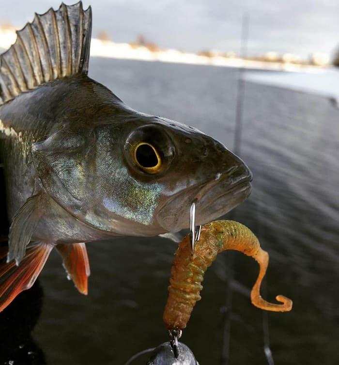 Где ловить рыбу в Могилёве?