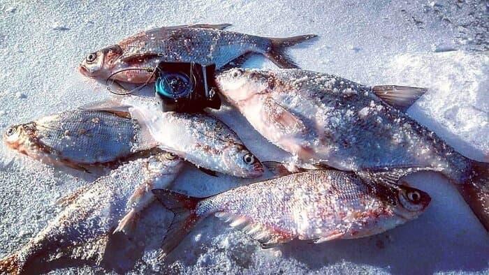 Места рыбной ловли в ДНР