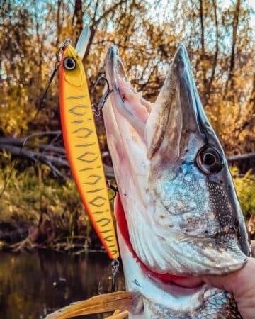 летняя рыбалка на щуку