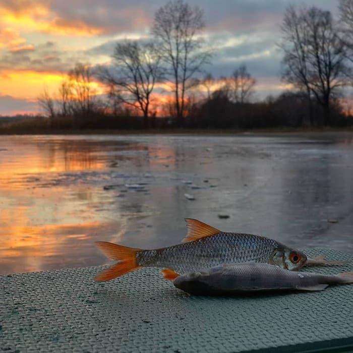 Виды рыб в Липецкой области