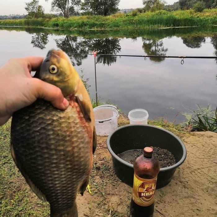 Липецкая область платная рыбалка