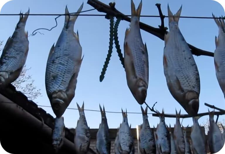 сушение рыбы на улице