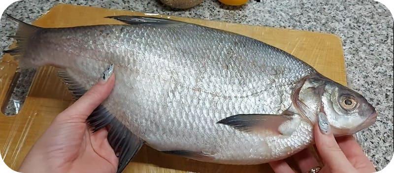 Выбор рыбы для ухи