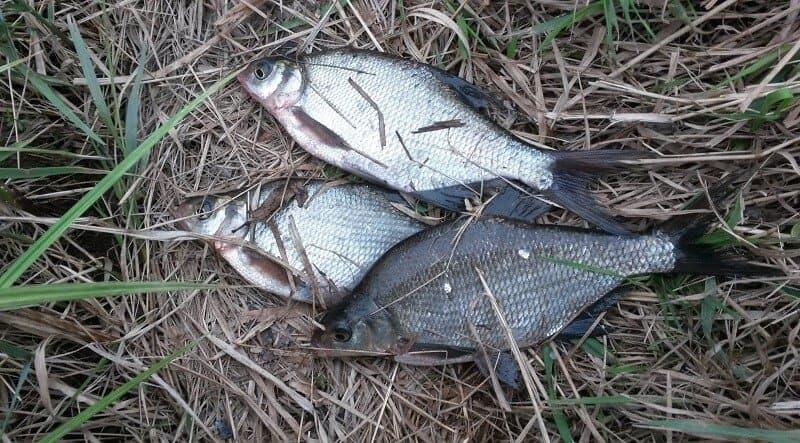 трофеи на рыбалке