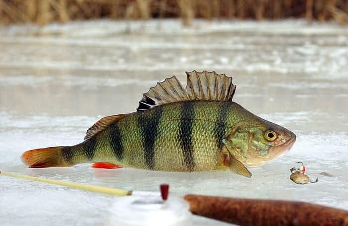 Зимняя рыбалка в Пермском крае