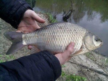 Рыбалка в Марий Эл