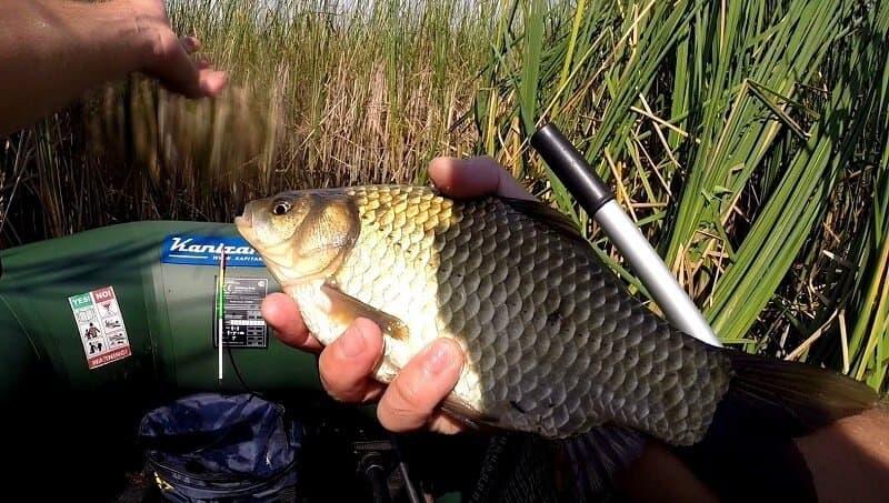 рыбалка на карася осенью