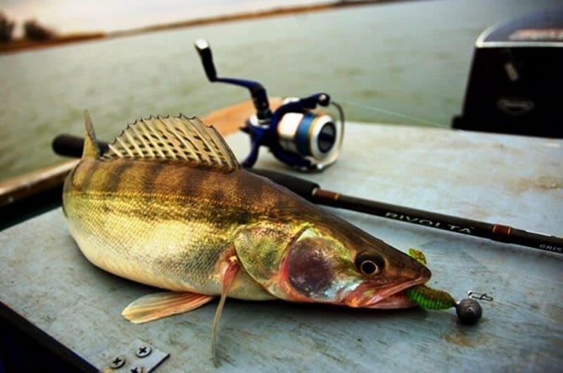 рыбалка на судака